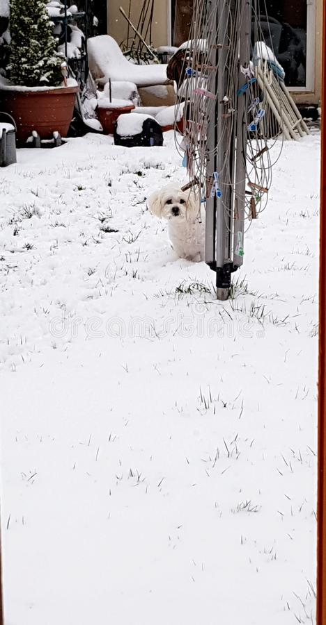 neige de crabot photographie stock libre de droits
