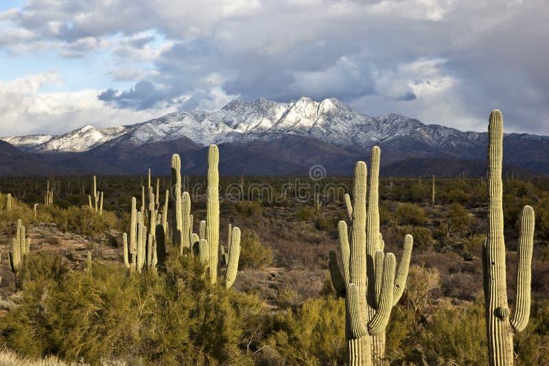 Neige de désert image libre de droits