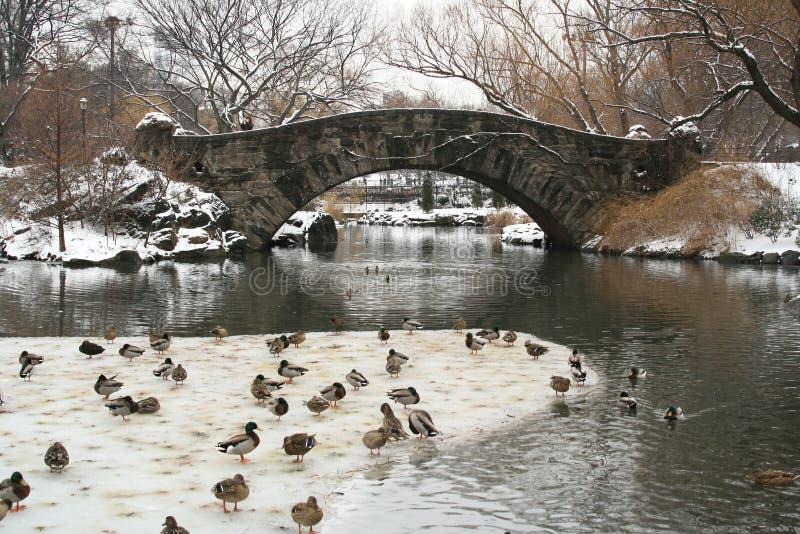 Neige de l'hiver dans Central Park photos libres de droits