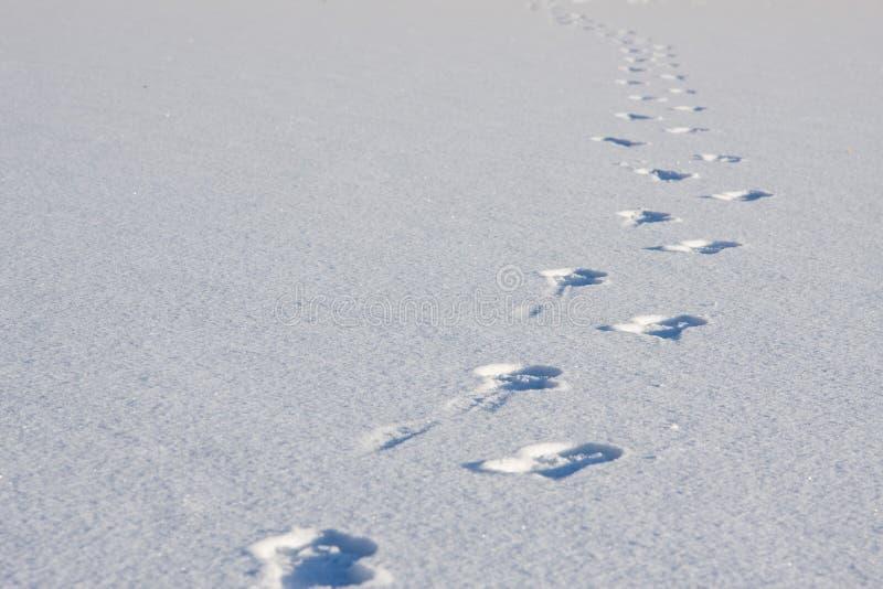 neige de marchepieds photographie stock libre de droits