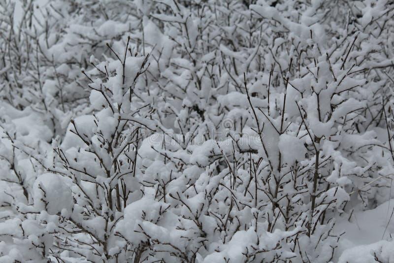 Neige en vallée Kashmir photo stock