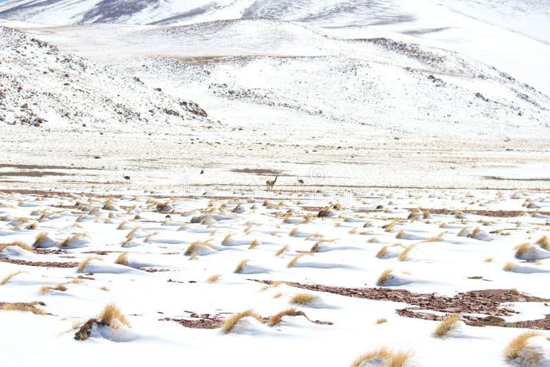 Neige entre le désert photo stock