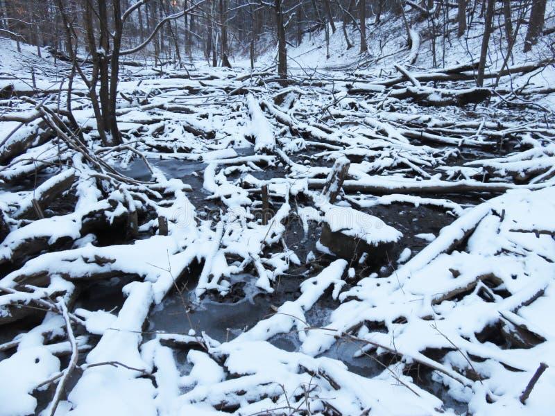 Neige et rondins d'hiver photographie stock libre de droits