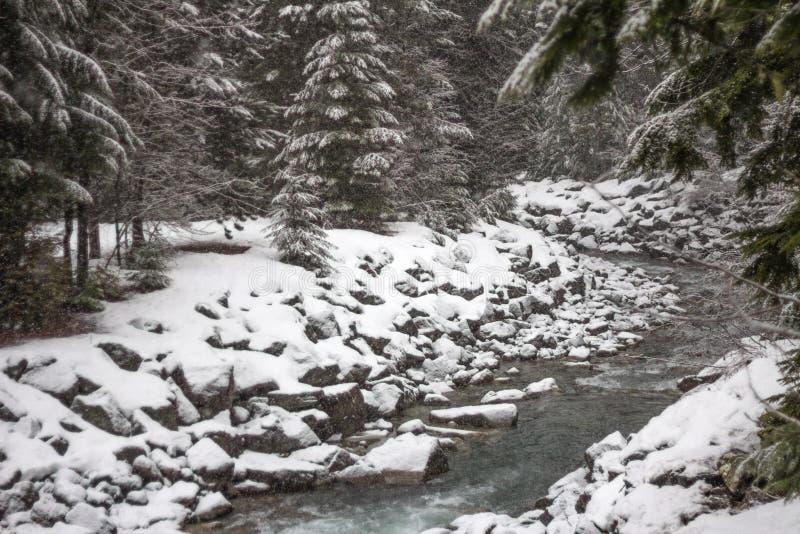 Neige fraîche tombant sur des berges et des arbres, Whistler, AVANT JÉSUS CHRIST photographie stock libre de droits