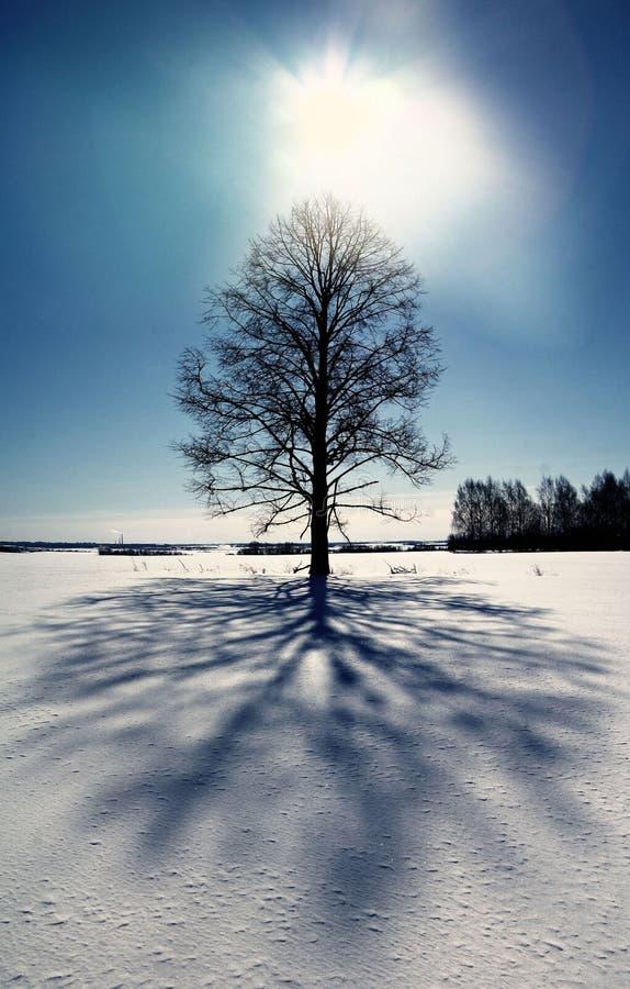 Neige froide de paysage de forêt d'hiver photos stock