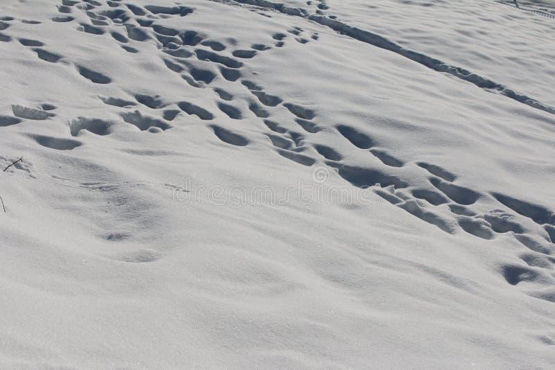 Neige molle fraîchement tombée avec des copies de pied photos stock