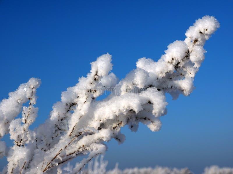 Neige pelucheuse du matin image libre de droits
