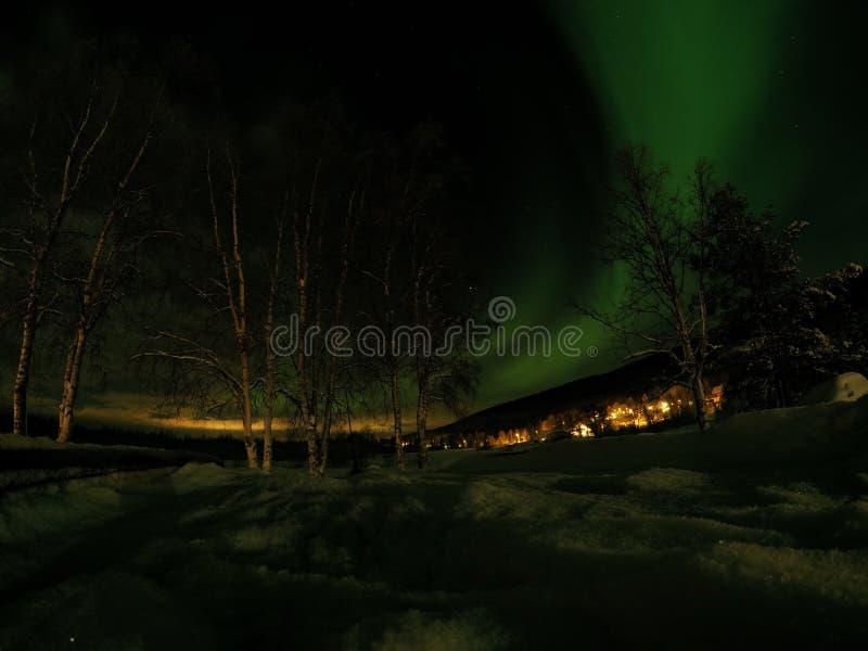 Neige profonde et hauts arbres avec l'aurora borealis dansant sur le ciel nocturne photos stock
