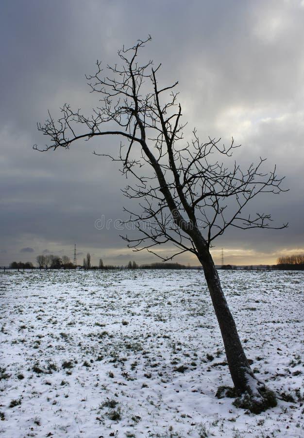 Neige sans feuilles figée de l'hiver d'arbre photos stock