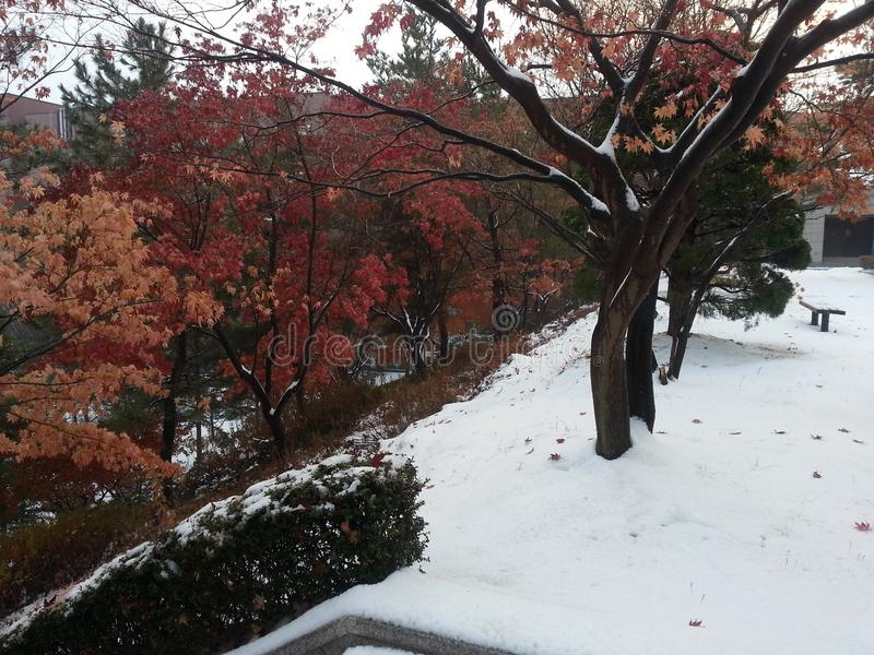 Neige sur des branches des arbres colorés photos stock