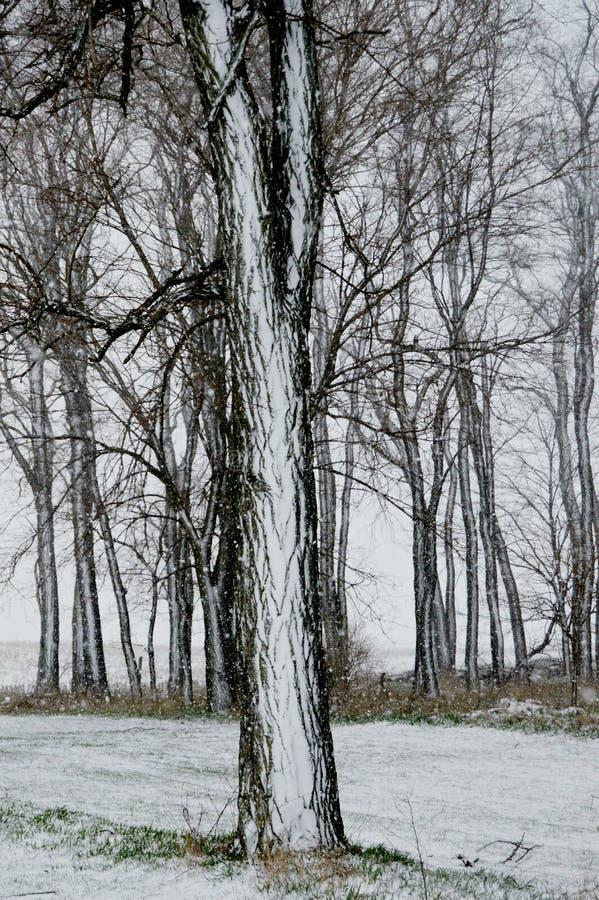 Neige sur l'écorce photographie stock libre de droits
