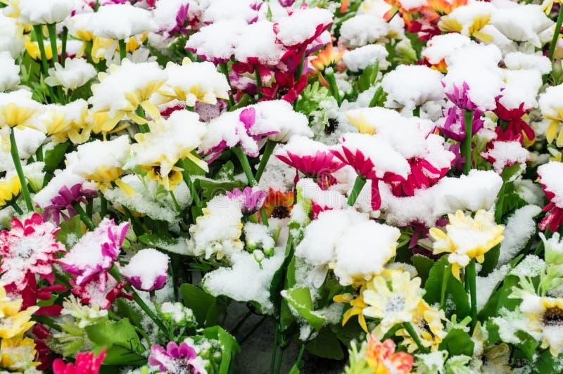 Neige sur la fleur photo stock