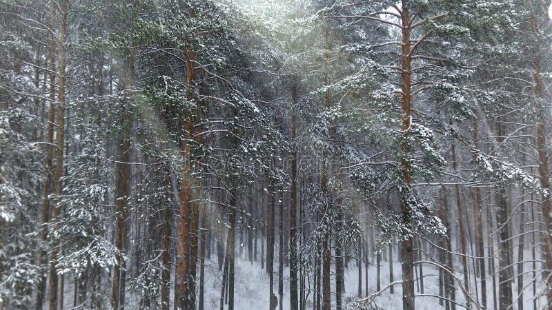 Neige sur les arbres image stock