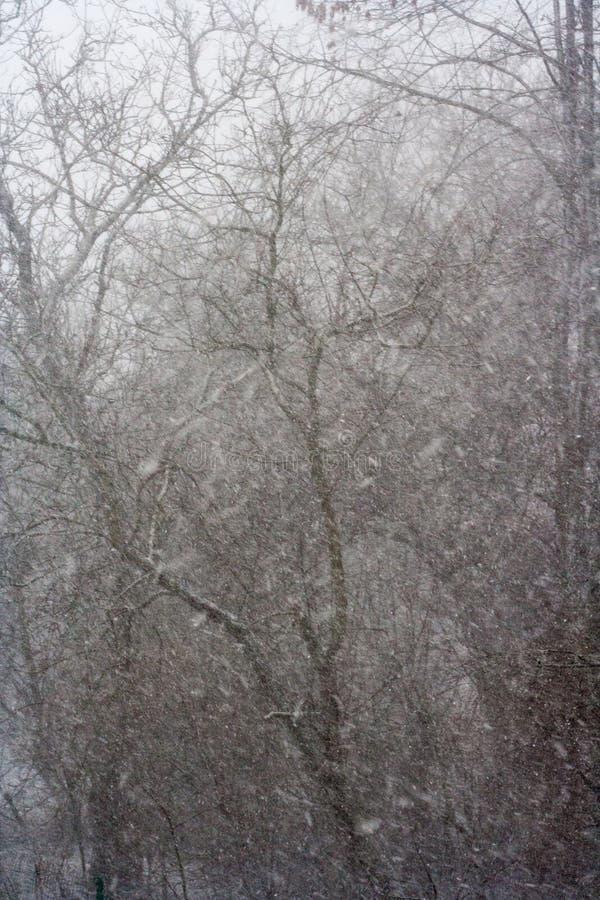 Neige tombant au printemps en avril et mai image libre de droits