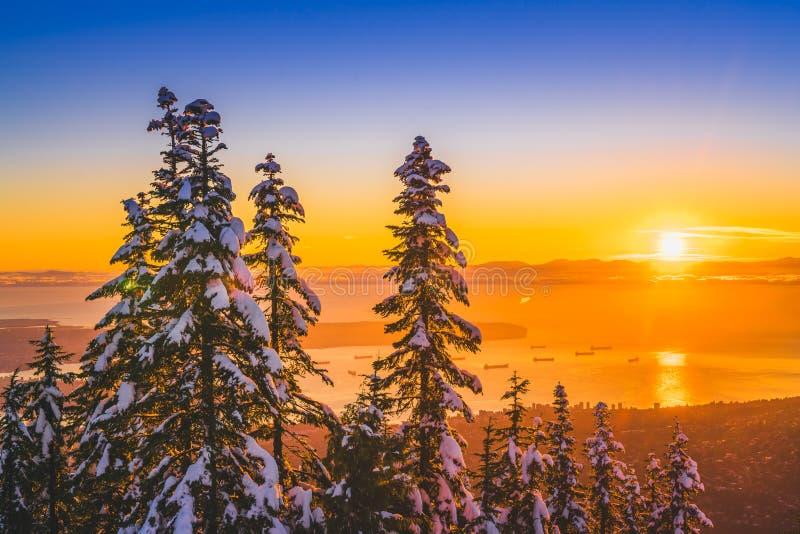 Neigez sur le pin avec les milieux d'or de coucher du soleil photo stock