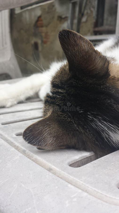 Neighborhood cat royalty free stock photography