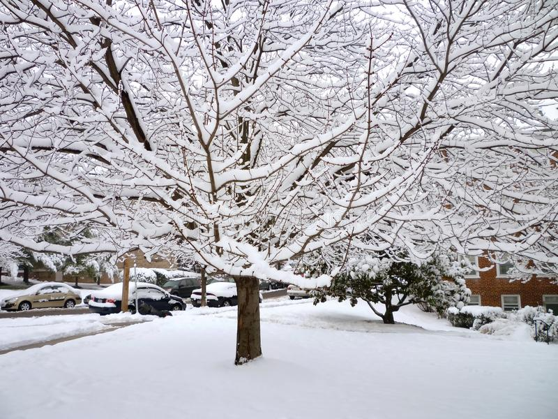 Download Neighborhood Snow Tree stock image. Image of february - 13068577