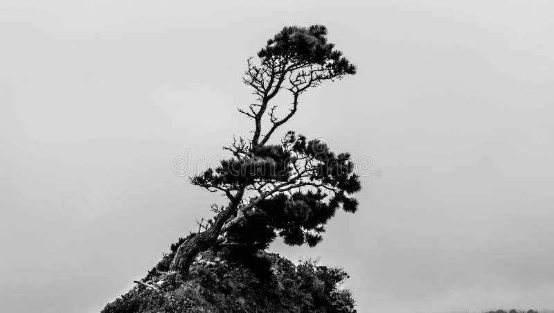 Neigungswald stockbilder