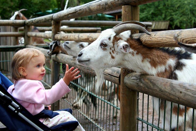 Nel giardino zoologico fotografia stock libera da diritti