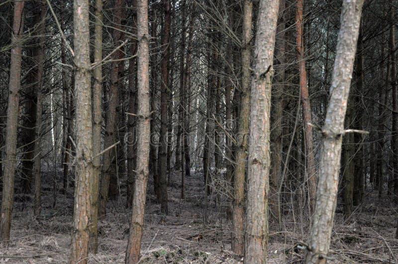 Nel labirynth della foresta immagine stock