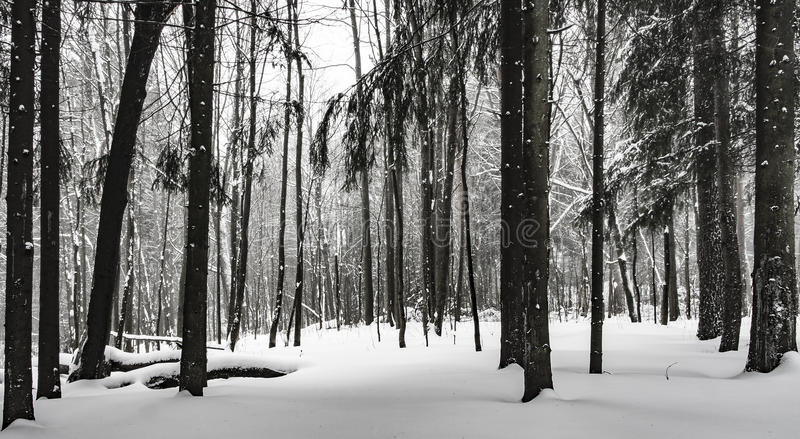 Nel legno fotografia stock libera da diritti