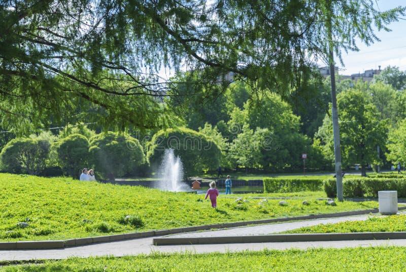 Nel legno Estate verde molti alberi ed arbusti immagini stock