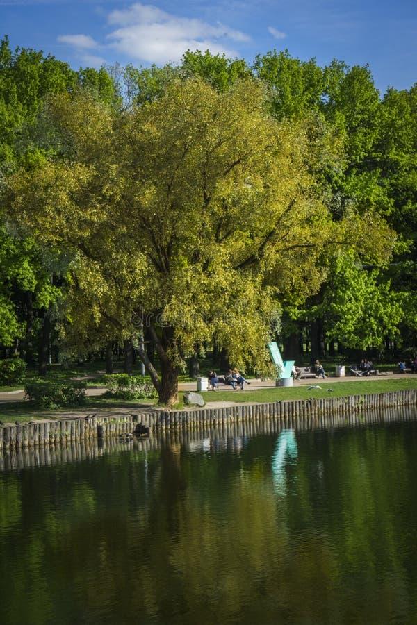 Nel legno Estate verde molti alberi ed arbusti fotografia stock