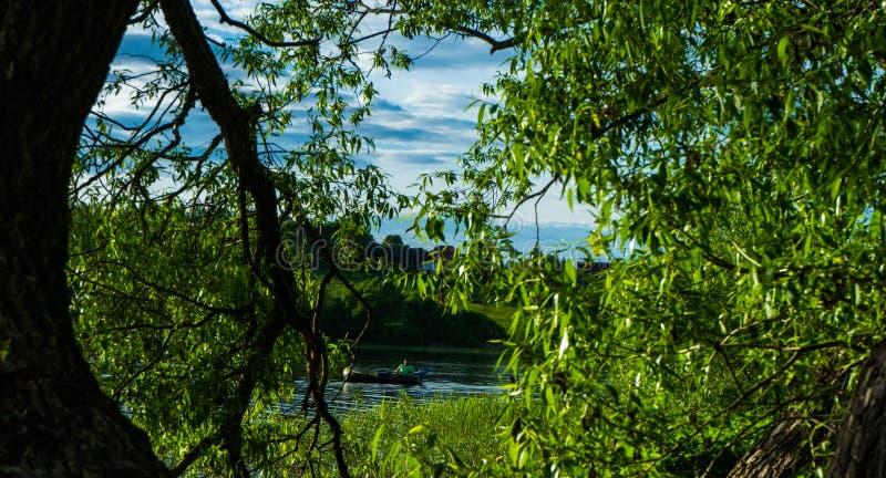 Nel legno Estate verde molti alberi ed arbusti fotografia stock libera da diritti