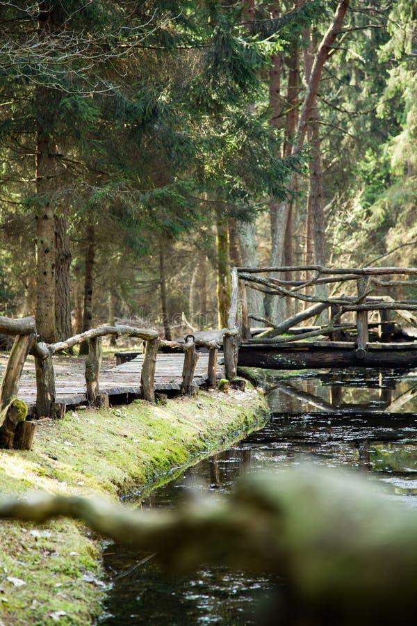 Nel parco regionale di Neris immagini stock libere da diritti