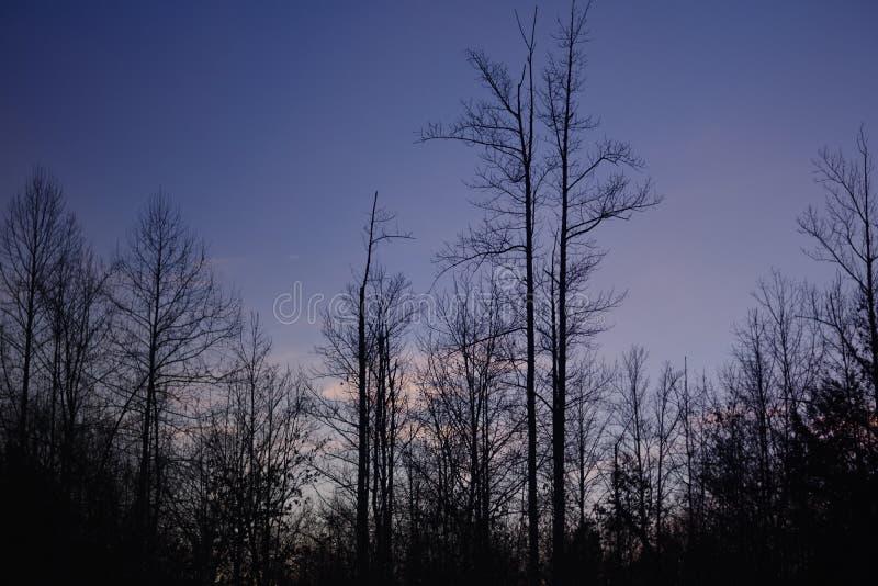 ` Nel ` Ridge Mountains blu di sera al tramonto nella molla in anticipo fotografie stock