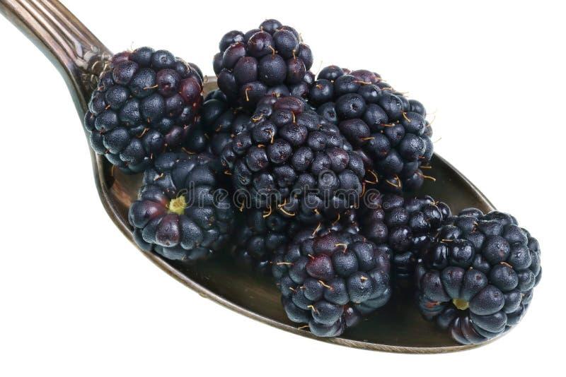 Nel vecchio cucchiaio dorato c'è un piccolo mucchio di alimento - macro isolata frutti dolci maturi delle more del giardino fotografia stock libera da diritti