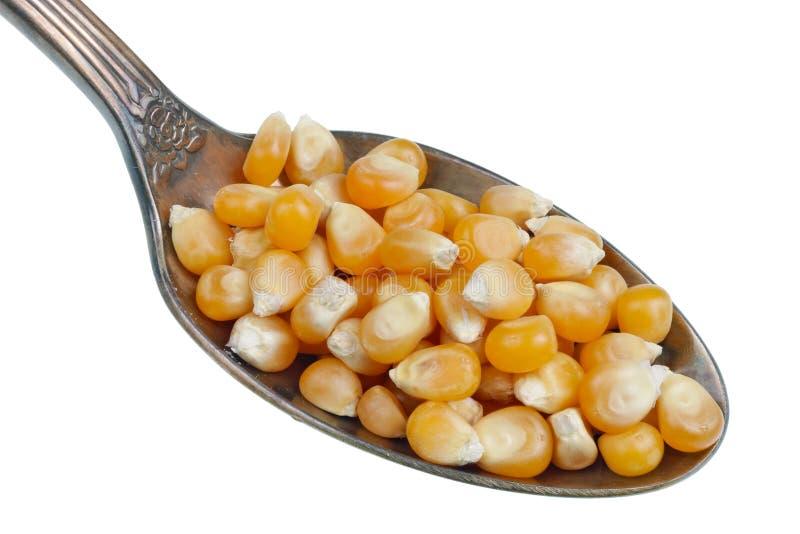 Nel vecchio cucchiaio dorato c'è un piccolo mucchio di alimento - macro isolata grani gialli asciutti del cereale immagini stock