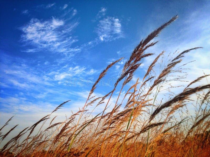 Nel vento immagine stock
