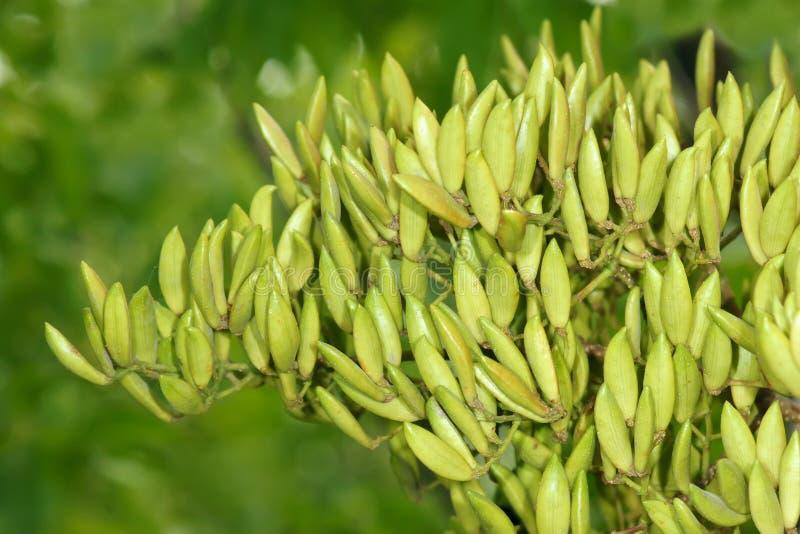 Nelkenfrüchte lizenzfreie stockfotografie