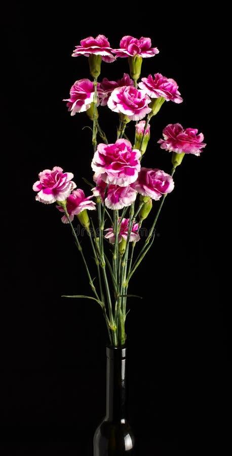Nelkenrosa-Blumenblumenstrauß auf dem dunklen Hintergrund stockfotografie