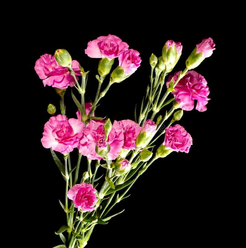 Nelkenrosa-Blumenblumenstraußabschluß herauf Draufsicht stockbild