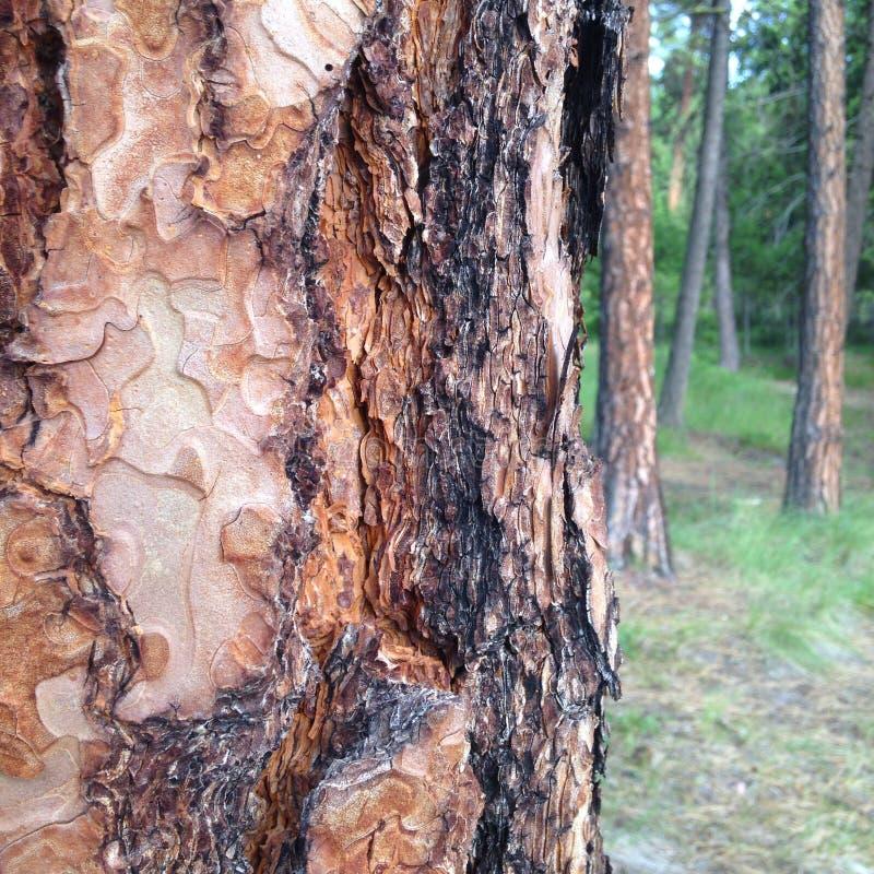 Nella foresta fotografie stock libere da diritti