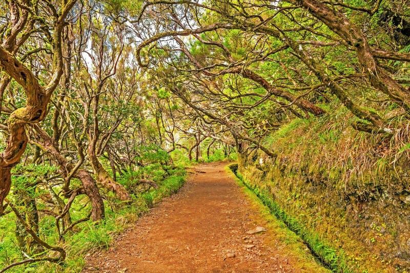 Nella foresta, il Madera immagine stock