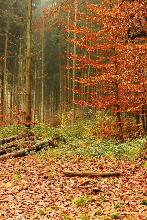 Nella foresta nella caduta fotografia stock libera da diritti
