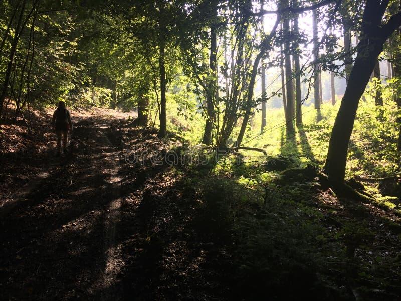 Nella foresta profonda, le Ardenne fotografia stock
