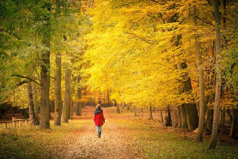 Nella sosta di autunno immagini stock