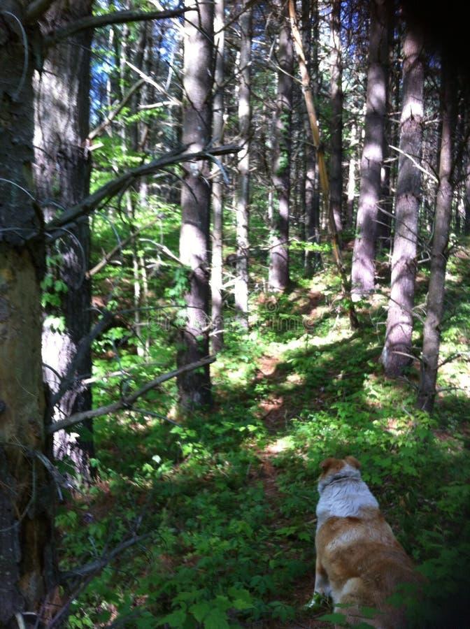 Nelle foschie di una foresta immagine stock