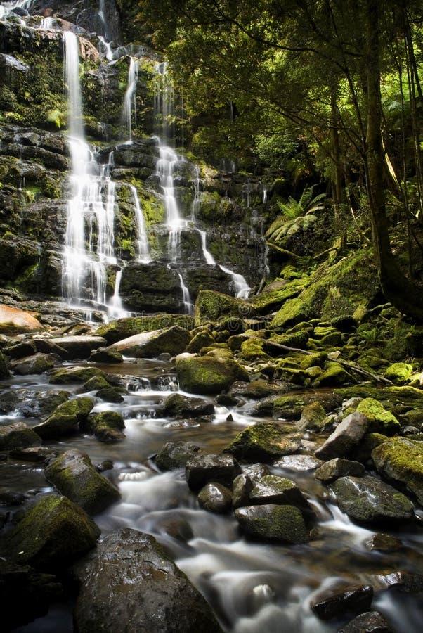 Nelson-Fälle, Tasmanien lizenzfreie stockfotografie
