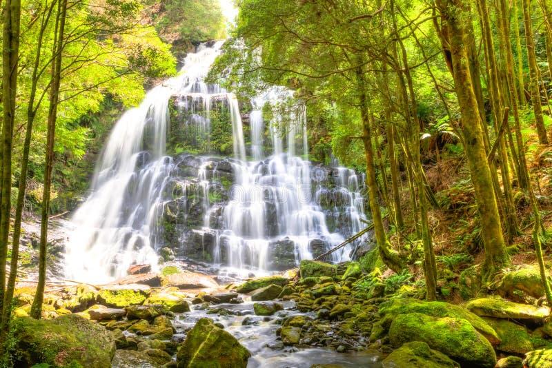 Nelson Falls Tasmania foto de archivo