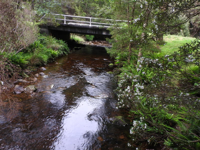 Nelson Falls Track, Tasmania foto de archivo