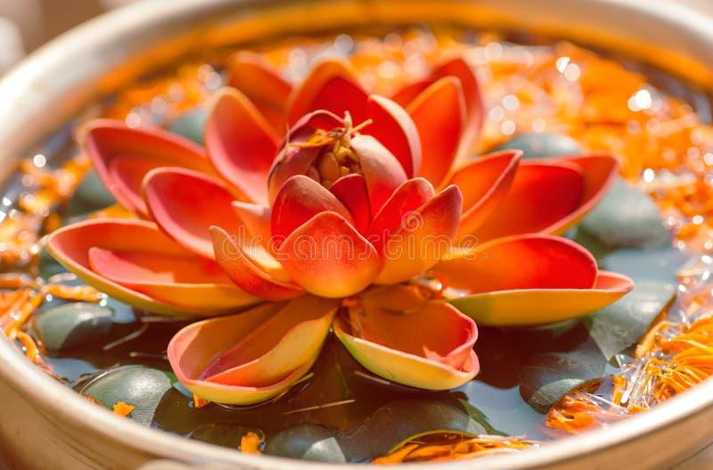 Nelumbo kwiat znać jako Lotus Święta roślina w hinduizmu i buddyzmu zdjęcie royalty free