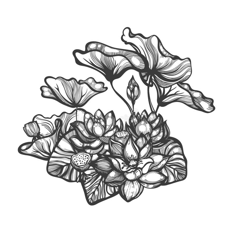 Nelumbo Lotus Flowers knospt Blattsamenhülsen Botanische mit Blumenzusammensetzung der Skizze lizenzfreie abbildung