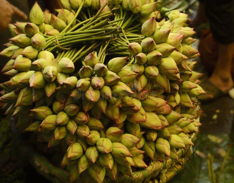 Nelumbonucifera als Indisch Lotus, heilige lotusbloem ook wordt bekend die stock foto