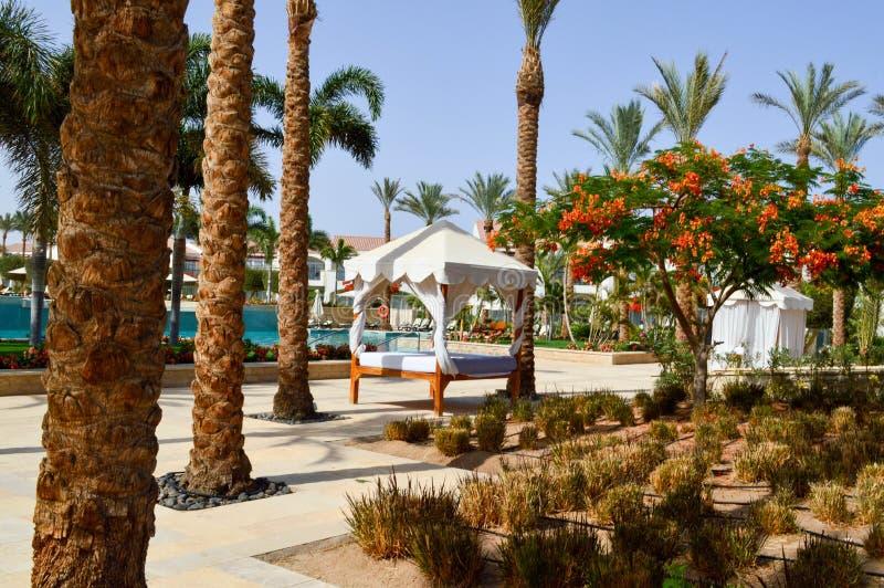Nemen de baldakijn witte luifel op pijlers boven het bed en de palmen op een tropische warme overzees, rust zijn toevlucht stock fotografie