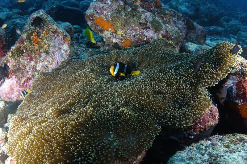 Nemo φωλιών στοκ φωτογραφίες